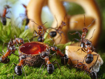 Party in anthill with honey and cake, ant tales Royalty Free Stock Image