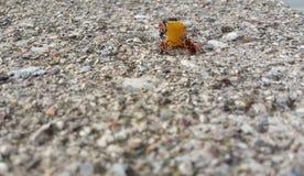 banquete de insectos de sobra fotografía de archivo libre de regalías