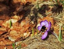 Banquete de la primavera Imagen de archivo libre de regalías