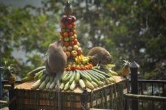 Banquete del mono Imagen de archivo