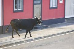 Banquete tradicional de la tauromaquia de Azores en Terceira portugal Tou Fotos de archivo
