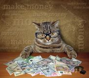 Banquier 2 de chat photos stock