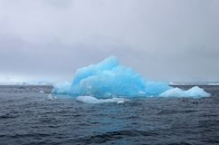 Banquisa bonita do iceberg ou de gelo, oceano antártico Foto de Stock
