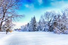 Bansko narciarski skłon i śnieżni drzewa, Bułgaria Fotografia Royalty Free