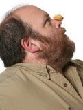 banta muffinen Arkivfoton