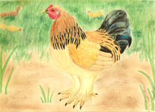 Bantam Chicken Drawing Stock Image