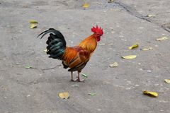 Bantam. Bantam is on the ground floor Cement stock photography