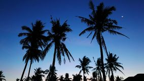 Bantayan palm trees. A video showing coconut palm trees, set against Bantayan Island sunset. Crescent moon can be seen in the sky stock footage