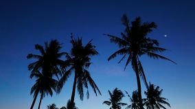 Bantayan palm trees stock video footage