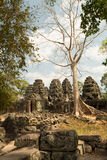 Banteay Kdei big tree. Vertical view Stock Photography