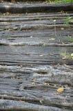 Banyan δέντρο ρίζας Στοκ εικόνα με δικαίωμα ελεύθερης χρήσης
