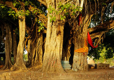 banyan δέντρο Στοκ Εικόνα