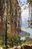 Banyan Royalty Free Stock Photography
