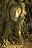 banyan Buddha kierowniczy korzeni s drzewo Fotografia Stock
