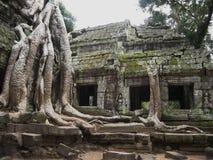 Banyan drzewa dorośnięcie na górze świątyni Ta Prohm - żadny ogrodzenie Zdjęcia Royalty Free