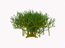banyan drzewo Obraz Stock