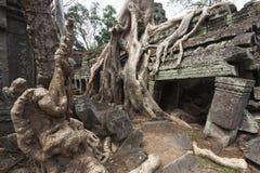 Banyan drzewo przy Ta Som Obrazy Royalty Free