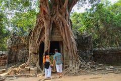 Banyan drzewo w Ta Prohm świątyni obraz stock