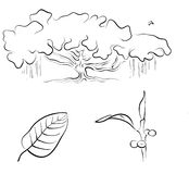 Banyan or Ficus benghalensis, vector illustration. Black on white Stock Images