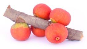 Banyan Fruits white background Royalty Free Stock Photo
