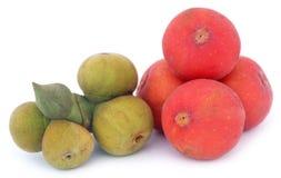 Banyan Fruits white background Stock Photos