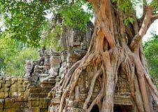 Banyan het wortel schieten in Angkor Stock Fotografie
