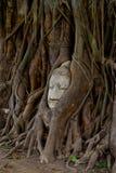 banyan kierowniczy michaelita drzewo Fotografia Stock