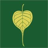 Banyan leave in dark green. Illustration of Banyan leave in dark green Royalty Free Stock Photo