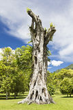 Banyan stump Stock Photos