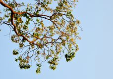 Beautiful branch of a tree in sky background Stock Photo