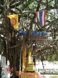 Banyan tree and Buddha Royalty Free Stock Images