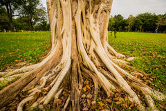 Banyan tree in the garden of one 2 Royalty Free Stock Photos