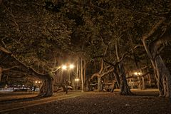 Banyan tree in Lahaina Hawaii Stock Image