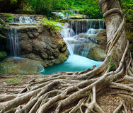 Banyan tree and limestone waterfalls in purity deep forest use n. Atural background,backdrop Stock Images