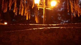 Banyan tree night trunk stock video