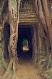 Banyan tree over the door from Ta Som. Angkor Wat Stock Photography