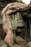 Banyan tree at Ta Prohm Temple Stock Images