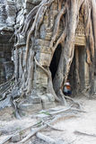 Banyan Tree at Ta Som Royalty Free Stock Photography