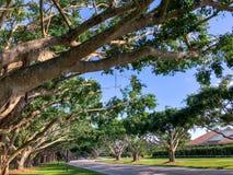 Banyan Tree Trunks Stock Photos