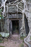 Banyan trees growing on buildings of Ta Prohm  temple Stock Image