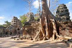 Banyan trees on ruins Stock Images