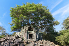 Banyan trees on ruins Royalty Free Stock Photography