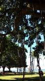 Banyanbäume Lizenzfreie Stockfotografie