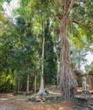 Banyanbaum, der nahe Preah Khan Temple wächst Lizenzfreies Stockfoto