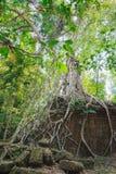 Banyanbaum, der nahe Preah Khan Temple wächst Lizenzfreie Stockfotos