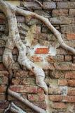 Banyanbaumwurzeln Lizenzfreies Stockbild