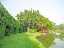 Banyanboom en de vijverachtergrond Stock Foto's