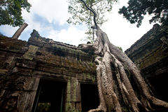 Banyanboom het groeien in de oude ruïne van Ta Phrom, Angkor Wat, Kambodja Stock Fotografie