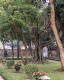 Banyanträd i den andra borggården, tempel av litteratur, Hanoi, Vietnam fotografering för bildbyråer