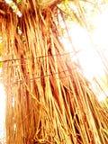 Banyanträdet rotar arkivbild